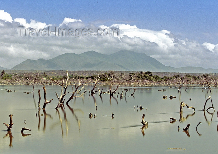 venezuela67: Venezuela - Isla de Margarita - Nueva Esparta: dead woods in a flooded area - photo by A.Walkinshaw - (c) Travel-Images.com - Stock Photography agency - Image Bank