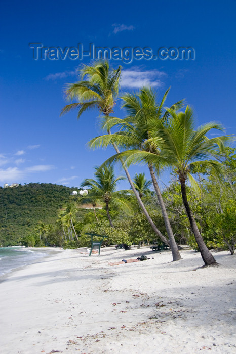 virgin-us42: US Virgin Islands - St. Thomas - Magens Bay: beach - white sand and coconut trees (photo by David Smith) - (c) Travel-Images.com - Stock Photography agency - Image Bank