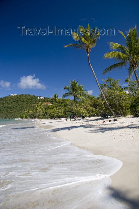 virgin-us47: US Virgin Islands - St. Thomas - Magens Bay: beach - white sand and coconut trees (photo by David Smith) - (c) Travel-Images.com - Stock Photography agency - Image Bank