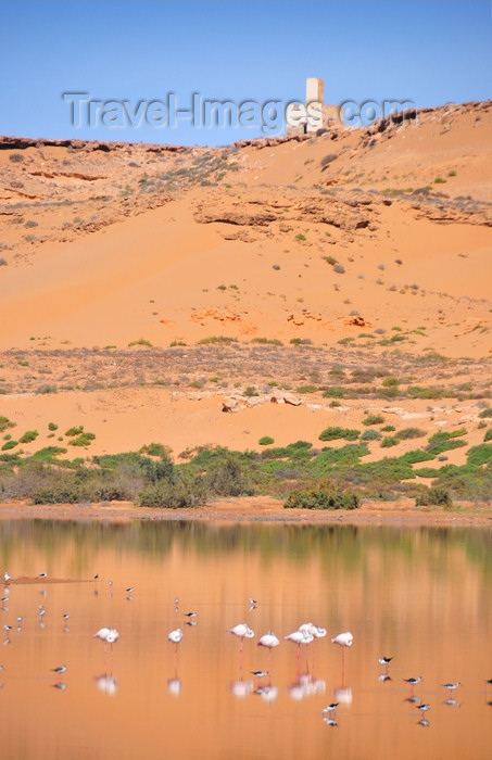 western-sahara39: Laâyoune / El Aaiun, Saguia el-Hamra, Western Sahara: flamingos and old watch tower on the edge of the desert - Oued Saqui el-Hamra - photo by M.Torres - (c) Travel-Images.com - Stock Photography agency - Image Bank