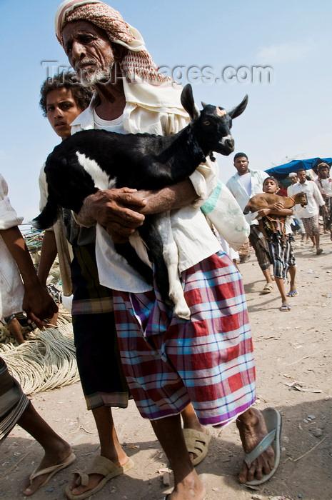 yemen100: Bayt al-Faqih, Al Hudaydah governorate, Yemen: Man carrying a goat at weekly market. - photo by J.Pemberton - (c) Travel-Images.com - Stock Photography agency - Image Bank