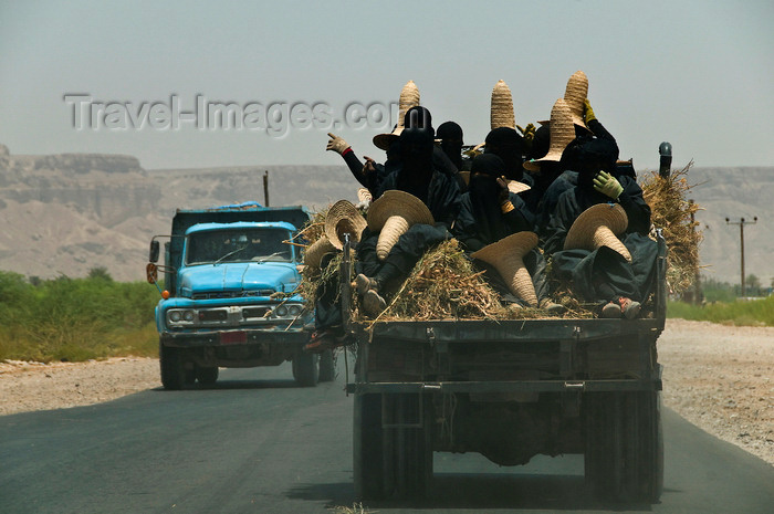 yemen63: Wadi Hadhramaut, Hadhramaut Governorate, Yemen: women in abayas and traditional straw hats going to work in the fields - conical witches hats, known as madhalla - trucks on the road - photo by J.Pemberton - (c) Travel-Images.com - Stock Photography agency - Image Bank