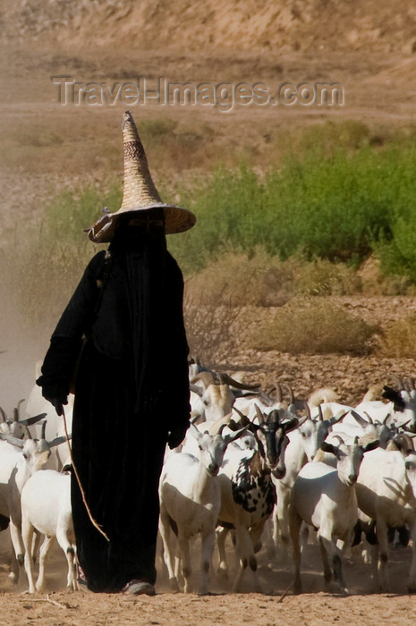 yemen76: Wadi Hadhramaut, Hadhramaut Governorate, Yemen: local woman leading a trip of goats - abaya and madhalla conical hat - niqab dress - photo by J.Pemberton - (c) Travel-Images.com - Stock Photography agency - Image Bank