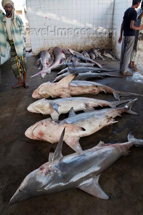 yemen85: Al Hudaydah / Hodeida, Yemen: Sharks in the morning fish market - photo by J.Pemberton - (c) Travel-Images.com - Stock Photography agency - Image Bank
