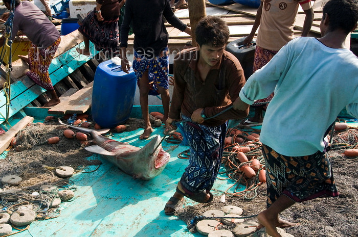 yemen89: Al Hudaydah / Hodeida, Yemen: dragging a shark to the morning fish market - photo by J.Pemberton - (c) Travel-Images.com - Stock Photography agency - Image Bank