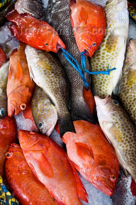 yemen92: Al Hudaydah / Hodeida, Yemen: assorted fish at morning fish market - photo by J.Pemberton - (c) Travel-Images.com - Stock Photography agency - Image Bank