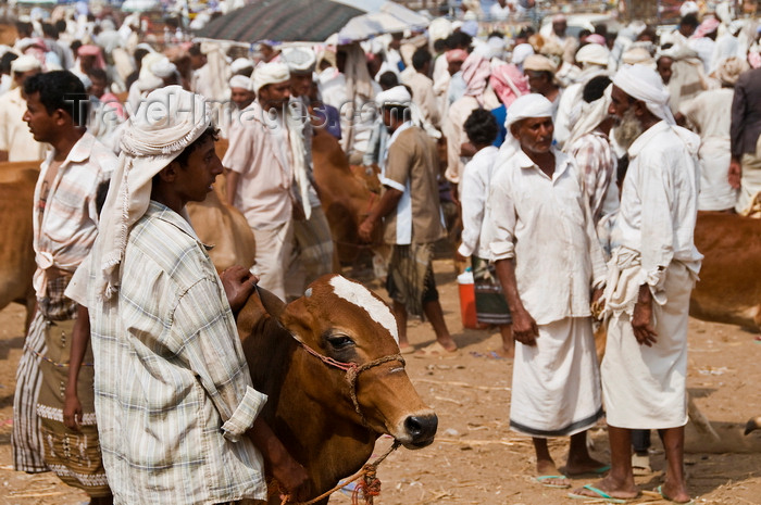 yemen98: Bayt al-Faqih, Al Hudaydah governorate, Yemen: crowd with cattle at the weekly market - photo by J.Pemberton - (c) Travel-Images.com - Stock Photography agency - Image Bank
