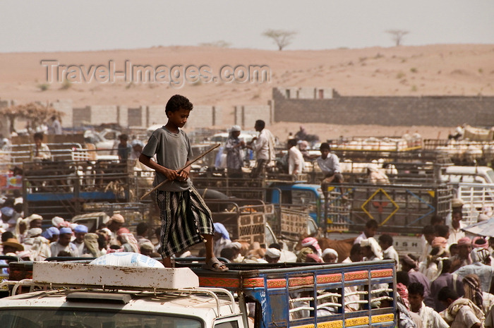 yemen99: Bayt al-Faqih, Al Hudaydah governorate, Yemen: boy looking out over livestock section at weekly market - cattle trucks - photo by J.Pemberton - (c) Travel-Images.com - Stock Photography agency - Image Bank