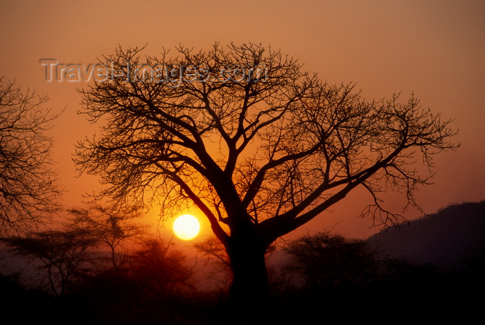 zambia6: Southern province, Zambia: baobab tree silhouette at sunset - Adansonia digitata - photo by C.Lovell - (c) Travel-Images.com - Stock Photography agency - Image Bank