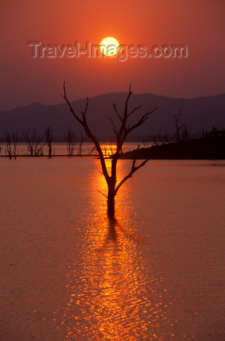 zimbabwe37: Lake Kariba, Mashonaland West province, Zimbabwe: spectacular watery sunset- silhouette of trees in an area flooded 50 years ago when the Kariba dam was built - photo by C.Lovell - (c) Travel-Images.com - Stock Photography agency - Image Bank