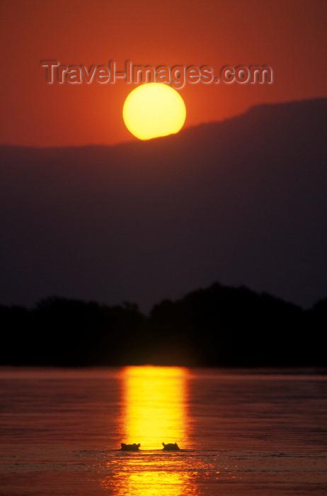 zimbabwe41: Zambezi River, Matabeleland North province, Zimbabwe: a pod of Hippos seem to be enjoying this magnificent sunset - photo by C.Lovell - (c) Travel-Images.com - Stock Photography agency - Image Bank