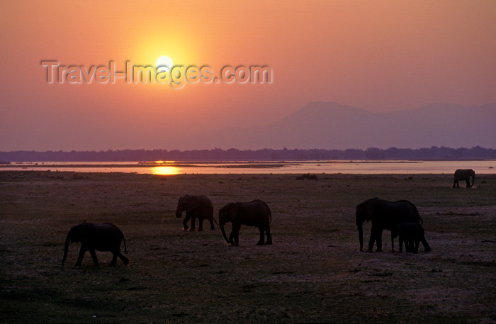 zimbabwe48: Matusadona National Park, Mashonaland West province, Zimbabwe: African Elephants are matriarchal society with the bulls living separately - sunset and herd by the lake - Loxodonta Africana- photo by C.Lovell - (c) Travel-Images.com - Stock Photography agency - Image Bank