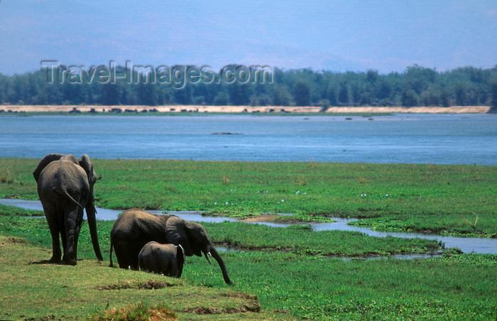 zimbabwe50: Matusadona National Park, Mashonaland West province, Zimbabwe: Elephants on the lake shore - Loxodonta Africana - photo by C.Lovell - (c) Travel-Images.com - Stock Photography agency - Image Bank