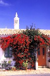 Portugal - Algarve - Cumeada (Sao Bartolomeu de Messines): bougainvillea over doorway / buganvilea sobre entrada - photo by T.Purbrook