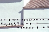 Lisbon: Martim Moniz - pombos / Martim Moniz - pigeons by the church - photo by F.Rigaud