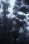 Reunion / Reuni�o - mist in the forest - calumet - photo by W.Schipper