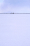 Lake Baikal, Irkutsk oblast, Siberian Federal District, Russia: three people on the horizon - Buryats on the frozen lake surface - winter scene -  UNESCO World Heritage site - photo by B.Cain