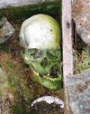 Wrangel Island / ostrov Vrangelya, Chukotka AOk, Russia: human skull - old bones on the ground - photo by R.Eime