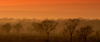 South Africa - Sunrise on savannah panorama - photo by B.Cain