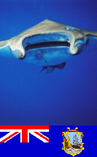 Saint Helena - Underwater photography - Manta Ray (photo by C.Breschi)