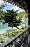 St Vincent and the Grenadines - Bequia island: leaning tree (photographer: Pamala Baldwin)
