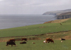 Scotland - Northeast coast, Highlands: Grazing over the North Sea - photo by M.Torres