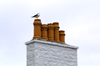 Scotland - Islay Island - Bowmore: a seagull surveys the ocean from his perch atop a chimney - photo by C.McEachern