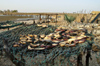 Senegal - Joal-Fadiouth: shell village - seafood drying - photo by G.Frysinger
