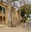 Senegal - Saint Louis: tree lined street - photo by G.Frysinger