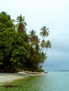 Turtle Islands, Southern Province, Sierra Leone: beach and coconut trees - photo by T.Trenchard