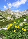Slovakia - High Tatras: flowers and mountains - photo by J.Kaman