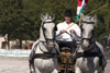 Slovenia - Lipica / Lipizza - Goriska region: Lipica stud farm - Combined driving event - flyng the flag of the Austro-Hungarian empire - Carriage Driving - photo by I.Middleton