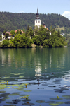 Slovenia - Assumption of Mary's Church reflected on Lake Bled - photo by I.Middleton