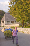 Slovenia - Old lady pulling cart of grass across bridge beside Bohinj Lake - photo by I.Middleton