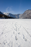 Slovenia - Footprints in the snow on Bohinj Lake when frozen over - photo by I.Middleton