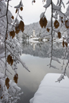 Slovenia - Ribcev Laz - leaves and view across Bohinj Lake in winter - photo by I.Middleton
