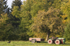 Slovenia - Jance: Autumn harvest - tractor - agriculture - photo by I.Middleton