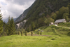 Slovenia - farm hous and grass stacks in the Soca Valley - photo by I.Middleton