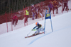 skier curving - Golden fox, Womens world cup giant slalom, Kranjska Gora, Podkoren, Slovenia - photo by I.Middleton