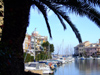 Spain / España - Valencia: little harbour of Avinguda del Mar - palm tree (photo by M.Bergsma)