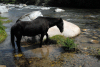 Spain / España - Cabezuella del Valle - Caceres province: horse on the river Jerte / caballo - Rio Jerte (photo by M.Torres)