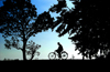 Nuwara Eliya, Central Province, Sri Lanka: silhouetted bicyclist and trees, rural back country - photo by B.Cain