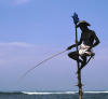 Sri Lanka - Weligama (Southern Province): stilt fisherman - traditional fishing method - photo by B.Cain