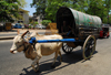 Colombo, Sri Lanka: draft zebu with cart - Lotus road - Fort - photo by M.Torres