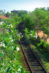 Bentota, Galle District, Southern Province, Sri Lanka: British built railway line along the western coast - rail tracks and flowers - photo by M.Torres