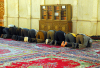 Syria - Damascus: Omayyad Mosque - men praying - Asr prayer - photographer: M.Torres