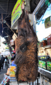 Damascus, Syria: camel head at the butcher - meat - food - photographer: M.Torres