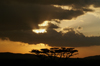 Africa - Tanzania - Sunset over Serengeti National Park - photo by A.Ferrari