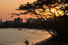Dar es Salaam, Tanzania: sunset on the bay - acacia tree and the waterfront - photo by M.Torres