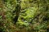 31 Tanzania - Kilimanjaro NP: Marangu Route - day 1 - a small river, in the rainforest - photo by A.Ferrari